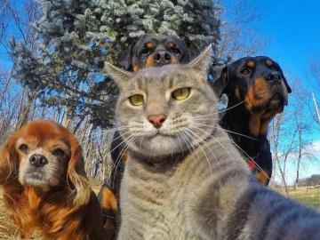 Un gato coge la cámara y saca ¿el mejor selfie de 2017?