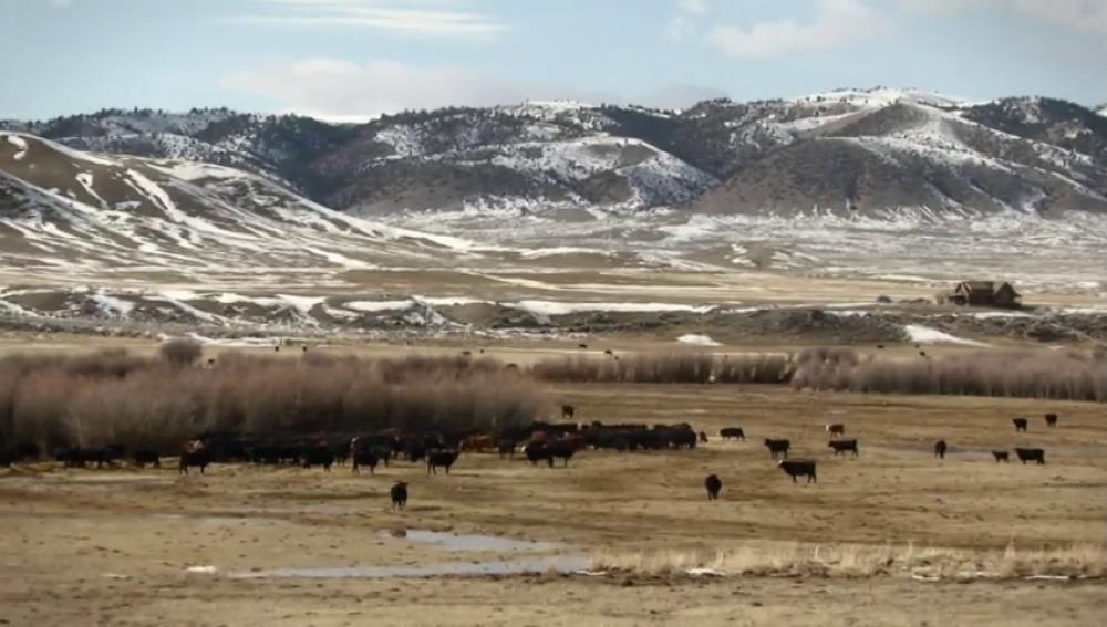 Frame 13.786625 de: Los ganaderos de Montana, preocupados por el ataque de los pumas