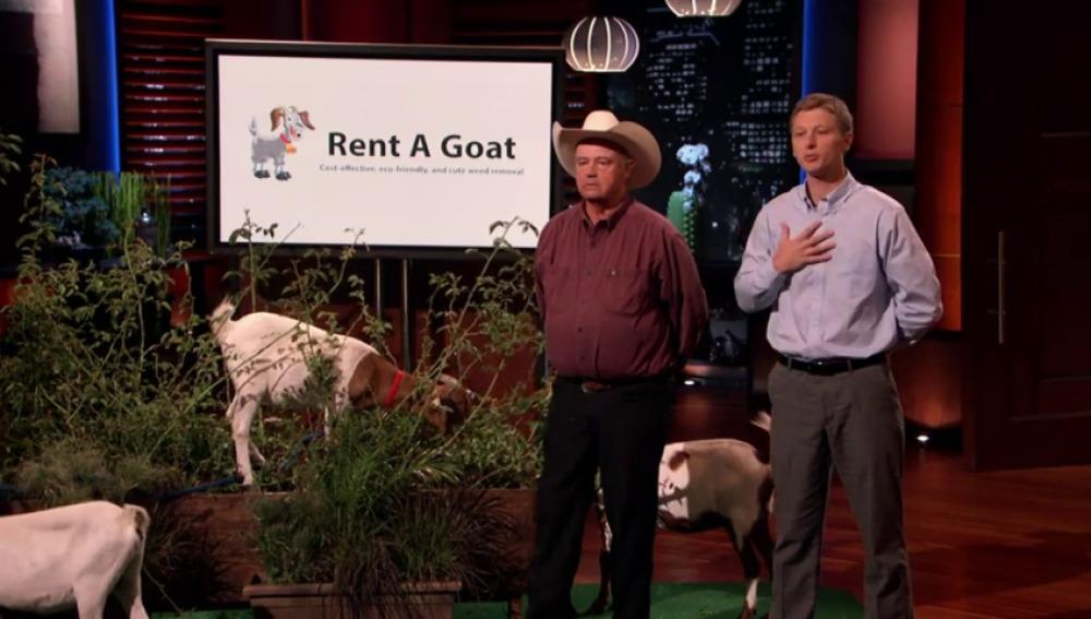 Unas cabras, el mejor método para arreglar tu jardín